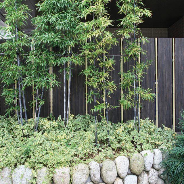 こだわり職人竹をはさんだ大和塀は、和の植栽と相性抜群