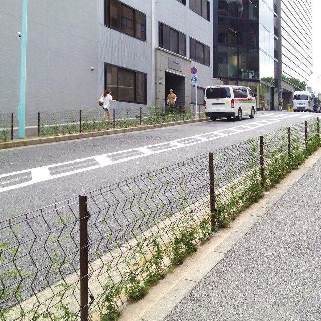 道路と歩道の境にトレメッシュシングルを設置し植物を絡ませる