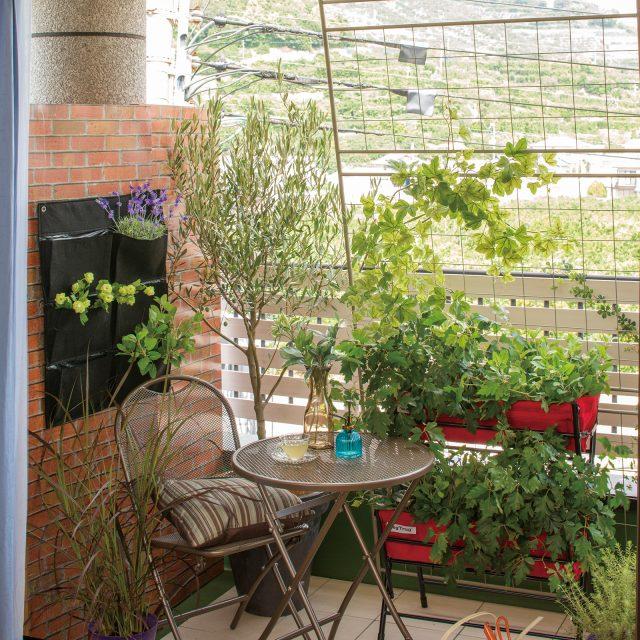 イギリス発信の新しいスタイルの菜園。ベジトラグ ポピー