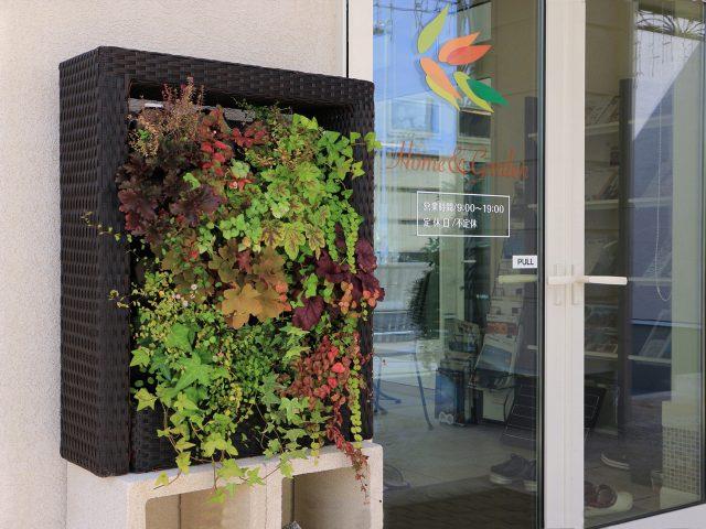 ラタンのフレームと壁面緑化