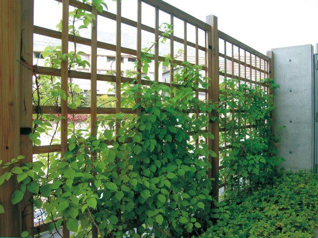 つる性植物を絡ませて壁面緑化に