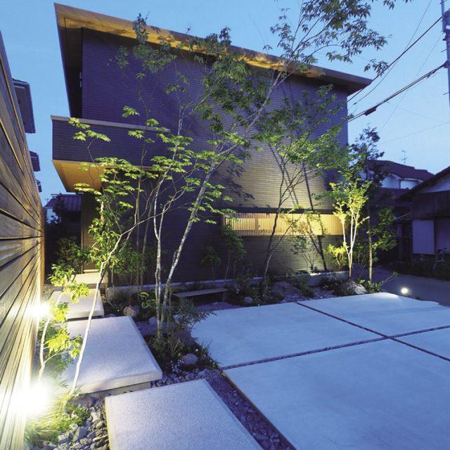 夜は照明により樹影を映し出し昼夜で異なる樹影を楽しむ