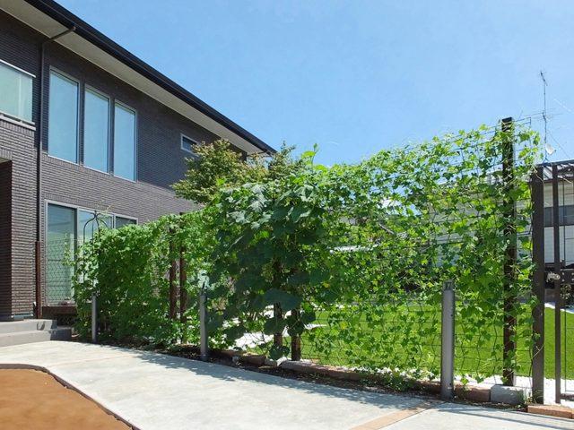 緑化フェンスとして緑のカーテンをつくります
